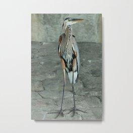 Great Blue Heron Photography Print Metal Print
