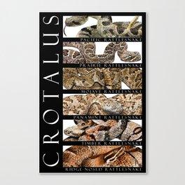 Rattlesnakes - Crotalus Canvas Print