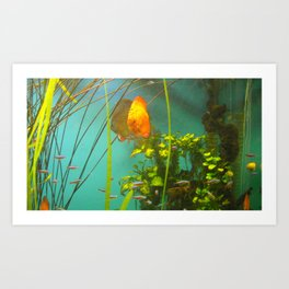 acvarium Art Print