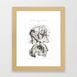 Human Anatomy Art Print BRAIN SKULL DISSECTION Vintage Anatomy, doctor medical art, Antique Book Pla Framed Art Print