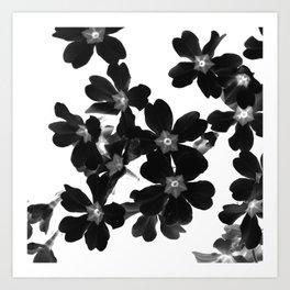 Primrose In BW Art Print