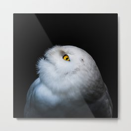 Winter White Snowy Owl Metal Print
