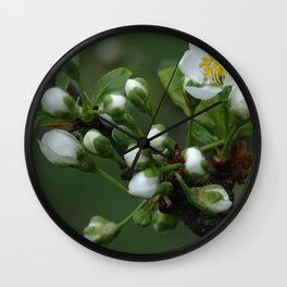 Plum tree flower buds 2 Wall Clock