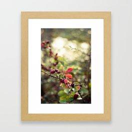 Autumn Glow I Framed Art Print