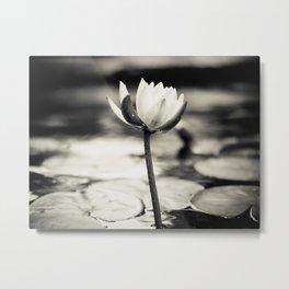 Black and White Cajun Water Lily Metal Print