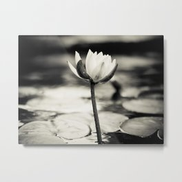 Black and White Cajun Water Lily Metal Print
