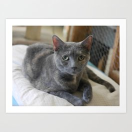 Sweet Russian Blue Grey Kitty Cat Art Print