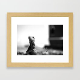 Your Majesty, the Reptile Framed Art Print