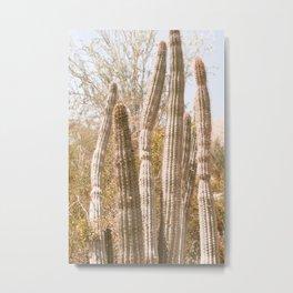 Retro Cactus I Metal Print