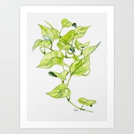 Devils Ivy Illustration Art Print