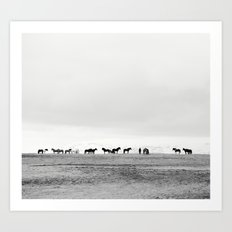 Black and White Horses in Landscape Photograph, Iceland Art Print