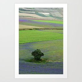 A tree between flowers of lentil Art Print