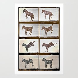 Muybridge Donkey  Art Print