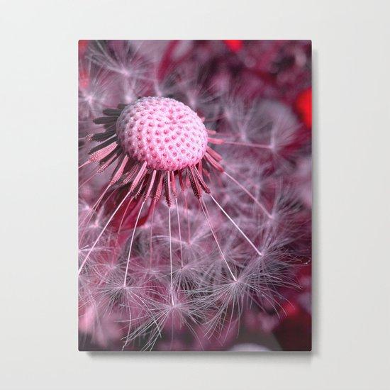 dandelion macro II Metal Print