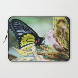 Black and Yellow Butterfly Laptop Sleeve