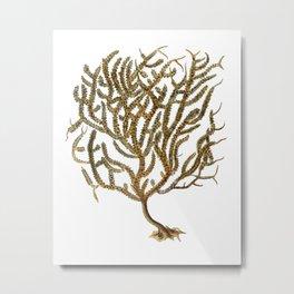 Sea Coral No.11 Antique Natural History Print. Metal Print