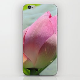 Lotus Bud in West Lake iPhone Skin