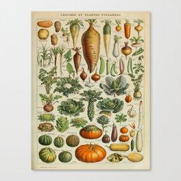 VEGETABLES Legumes Et Plantes Potageres Vintage Scientific Illustration French Language Encyclopedia Canvas Print