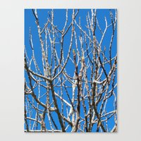 fig Canvas Prints featuring Fig by aeolia