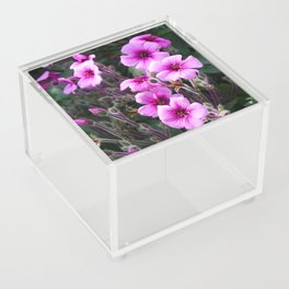 Beauty on The Rock Acrylic Box