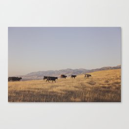 Western Cattle Art Canvas Print