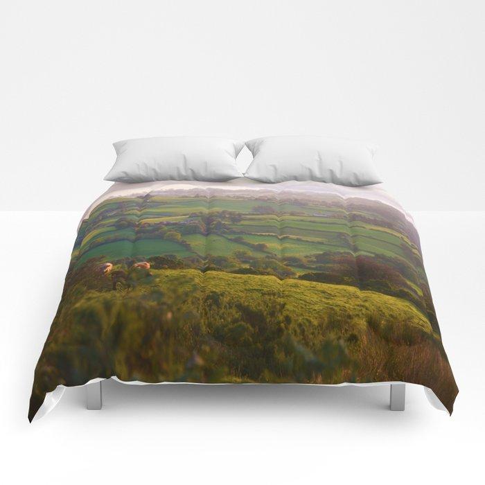 Early Morning Glory Comforters