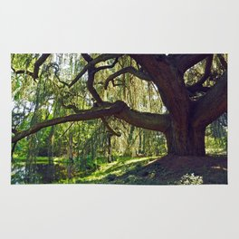 Weeping Blue Atlas Cedar Rug
