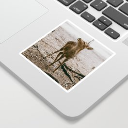Nara, Japan Deer Fawn Sticker