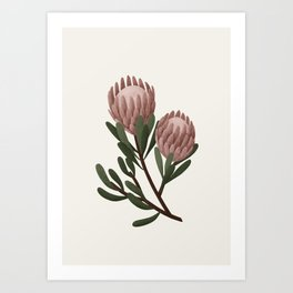 Protea Flower Art Print