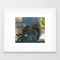 squirrel Framed Art Prints featuring squirrel by Timeless Art On Canvas