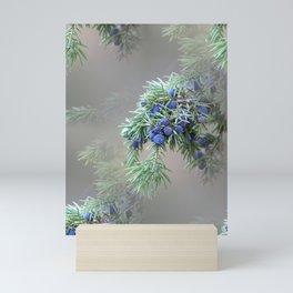 Juniper berries (seed cones) Mini Art Print