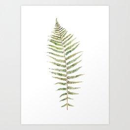 Botanical Single Leaf Fern Art Print