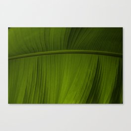 Tropical Leaf Closeup Canvas Print