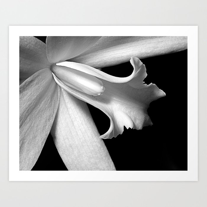 Black and white orchid  Art Print