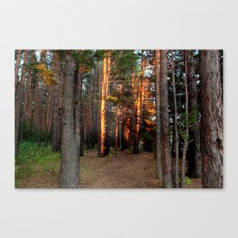 The pine forest Canvas Print