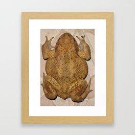 Overhead Anatomy Of a Bufo Bufo Toad Framed Art Print