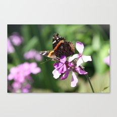 Butterfly and Phlox Canvas Print