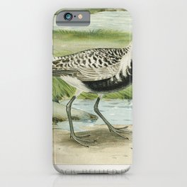 The Black-Bellied Plover (Squatarola Squatarola) illustrated by JL Ridgway (1859-1947) and WB Gillet iPhone Case
