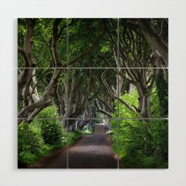 Dark Hedges, Northern Ireland. Wood Wall Art