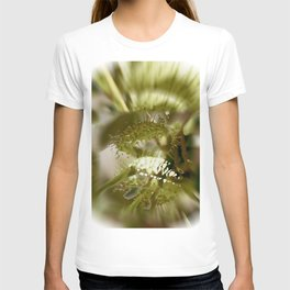 Fatty Prickle T-shirt