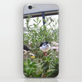 beautiful birds iPhone Skin