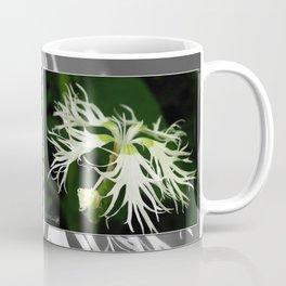 Dianthus named Superbus White Coffee Mug