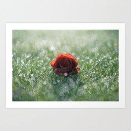 Rose in morning dew Art Print