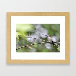 2615 Framed Art Print