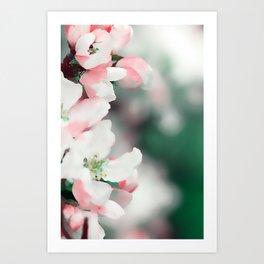 Almond Bloom 7 Art Print