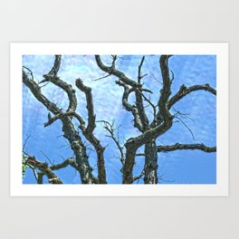 High Dynamic Range Tree Art Print