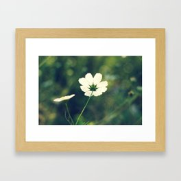 white cosmos Framed Art Print
