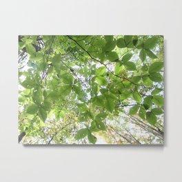 Green Leaves Elm Metal Print