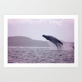 Breaching Humpback Art Print