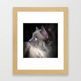 Ragdoll Profile Framed Art Print